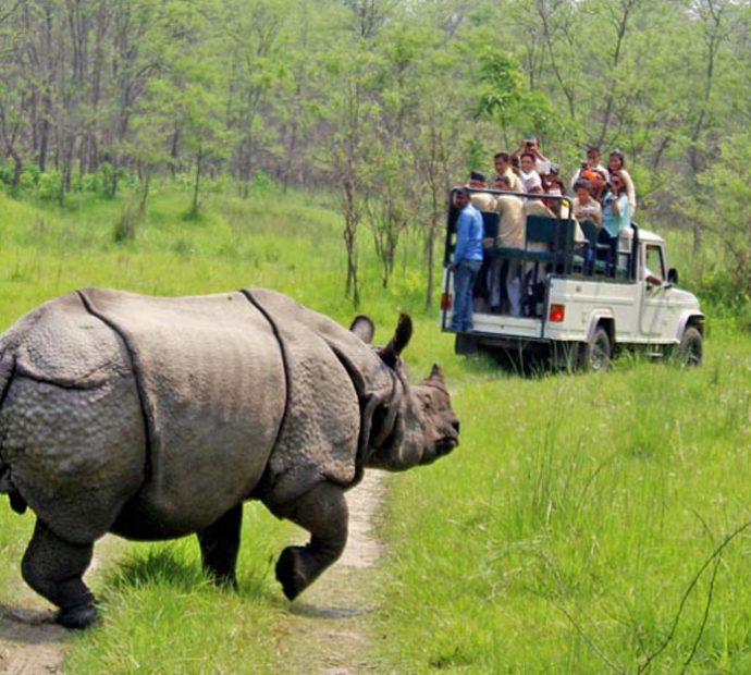 Lockdown comes as boon to wildlife in Chitwan National Park