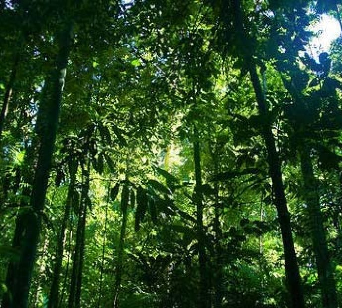 Forest sector a major base of prosperity